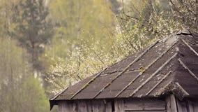 Petite birdie se reposant sur le bord de toit banque de vidéos