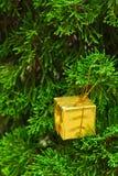 Petite boîte-cadeau sur le pin. Photos libres de droits