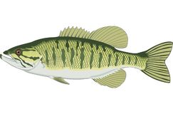 Petite bouche Bass Illustration illustration libre de droits