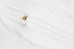Petite branche se tenant dans la neige Photographie stock