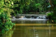Petite cascade à écriture ligne par ligne dans la forêt Photos libres de droits