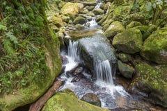 Petite cascade à écriture ligne par ligne dans la forêt Photo libre de droits
