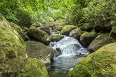 Petite cascade à écriture ligne par ligne dans la forêt Photos stock