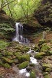 Petite cascade à écriture ligne par ligne dans la forêt d'automne Photo libre de droits