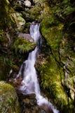 Petite cascade à écriture ligne par ligne dans la forêt primitive Image libre de droits