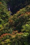 Petite cascade à écriture ligne par ligne dans la jungle d'Hawaï Images libres de droits