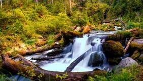 Petite cascade avec des identifiez-vous l'eau sur le fond de la forêt dans le Russe sauvage Photographie stock libre de droits