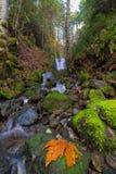 Petite cascade chez Lewis River Falls inférieur dans l'état de Washington images libres de droits