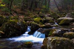Petite cascade dans la forêt foncée Photographie stock libre de droits