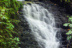 Petite cascade dans la réservation de forêt de nuage de monteverde Images stock