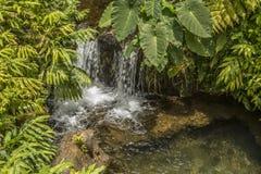 Petite cascade dans le courant dans les bois Photographie stock libre de droits