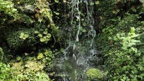 petite cascade de 4 k s'étendant dans toutes les plantes vertes, les feuilles et les essais en parc naturel national banque de vidéos