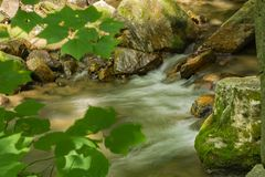 Petite cascade de montagne dans la forêt photos stock
