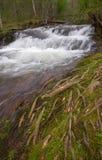 Petite cascade par les racines moussues d'arbre Photo stock