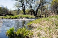 Petite cascade sur une rivière de forêt dans le printemps Photos libres de droits