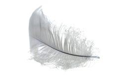 Petite clavette blanche Photographie stock