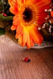 Petite coccinelle en bois devant le bouquet des gerberas Photos libres de droits