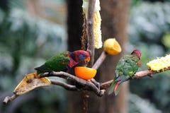 Petite consommation d'oiseau Photo stock