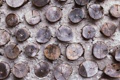 Petite coupe en bois de cercle d'arbre Photo stock