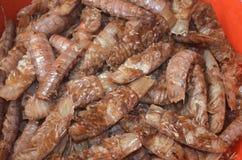 Petite crevette rose Photos stock