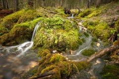 Petite crique dans la forêt entourée par la mousse Photographie stock libre de droits