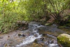 Petite crique dans une forêt Photographie stock libre de droits