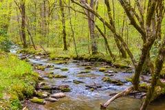 Petite crique de forêt Photographie stock