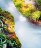 Petite crique de forêt précipitant l'au sol moussu de forêt Image libre de droits