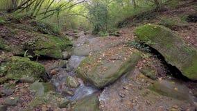 Petite crique gentille sur la forêt en Espagne dans un jour nuageux banque de vidéos