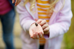 Petite fille adorable attrapant de petits babyfrogs Photo stock