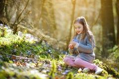 Petite fille adorable sélectionnant les premières fleurs du ressort dans les bois la belle journée de printemps ensoleillée Photographie stock