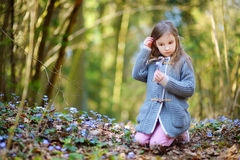 Petite fille adorable sélectionnant les premières fleurs du ressort dans les bois Image stock