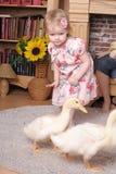 Petite fille avec des canetons Photographie stock libre de droits