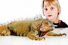 Petite fille avec l'iguane Photographie stock