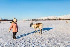 Petite fille avec le renne Photo libre de droits