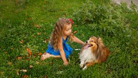 Petite fille avec un chien Sheltie Photo stock