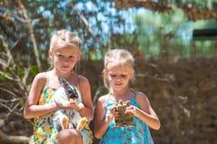 Petite fille avec une tortue de terre et un lapin mignon Photo stock