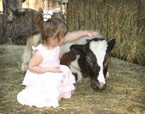 Petite fille choyant le veau Images libres de droits