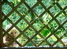 Petite fille derrière les barres Image stock