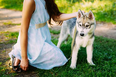 Petite fille et son chien Husky In Summer Park Image stock