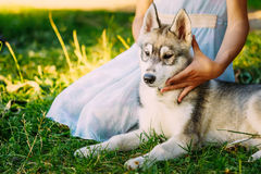 Petite fille et son chien Husky In Summer Park Photographie stock