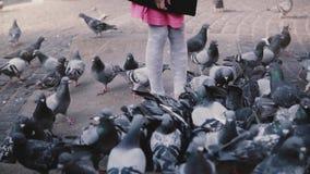 Petite fille européenne surronded par des oiseaux Mouvement lent L'enfant féminin mignon enthousiaste regarde le grand troupeau d banque de vidéos
