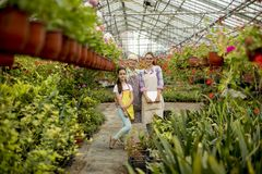 Petite fille, jeune femme et femme supérieure dans le jardin d'agrément photos libres de droits