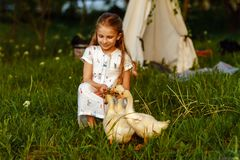 Petite fille jouant avec l'oie de bébé Beau, animal image stock