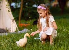 Petite fille jouant avec l'oie de bébé Beau, animal image libre de droits