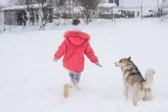Petite fille jouant avec un chien de race de chien de traîneau sibérien dans le winte Image libre de droits