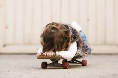Petite fille mignonne de hippie avec la planche à roulettes Photo libre de droits