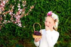 Petite fille mignonne posant avec le fruit frais dans le jardin ensoleill? Peu fille avec le panier des raisins image stock