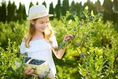 Petite fille mignonne sélectionnant les baies fraîches à la ferme organique de myrtille le jour chaud et ensoleillé d'été Aliment images stock