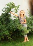 Petite fille moissonnant des framboises Photos libres de droits